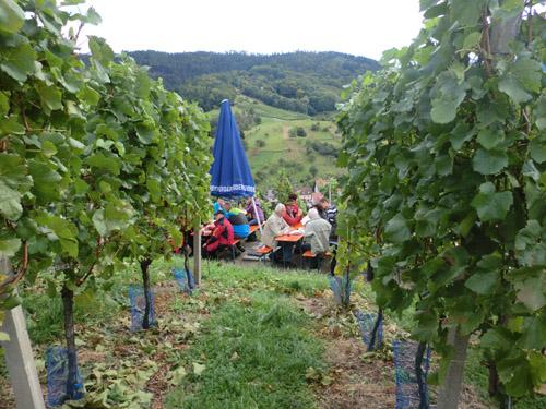 Weinwandertag 2012